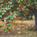 Low Hanging Fruit Definition – Best Keywords To Get Ranked Sooner