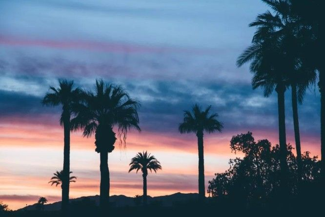 fancycrave-palm-trees free stock photos
