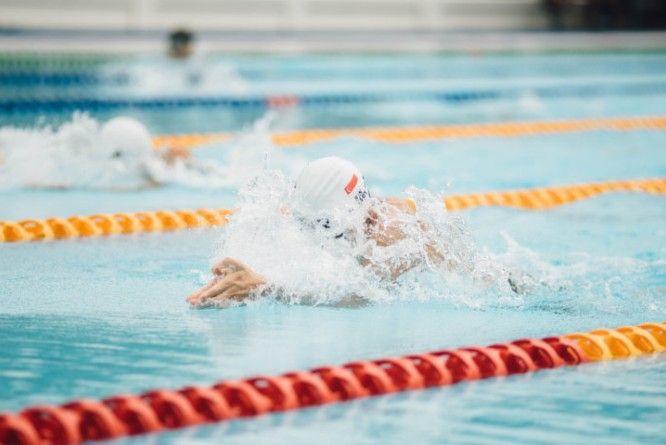 skuawk-swimming free stock photos